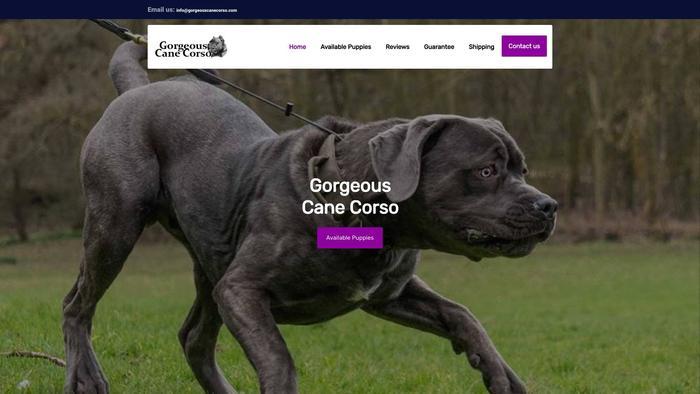 Gorgeouscanecorso.com - Cane Corso Puppy Scam Review