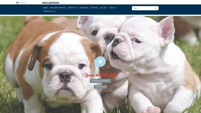 Bulldog4u.com - Bulldog Puppy Scam Review