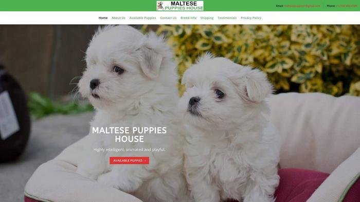 Maltesepuppieshouse.com - Maltese Puppy Scam Review