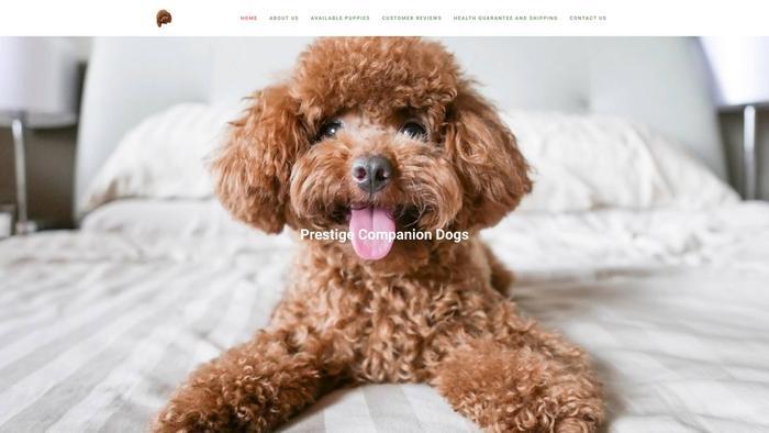 Patrickstoypoddles.com - Poodle Puppy Scam Review