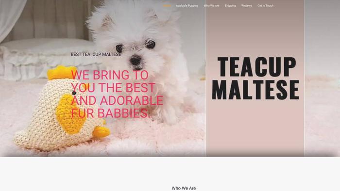 Teacupmaltesez.com - Maltese Puppy Scam Review