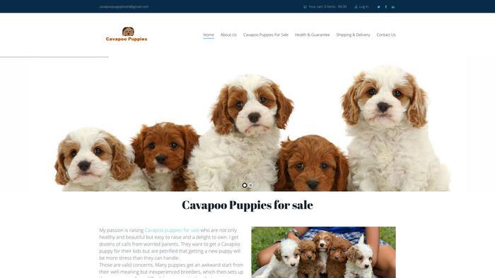 Cavapoopuppybreed.com - Cavapoo Puppy Scam Review