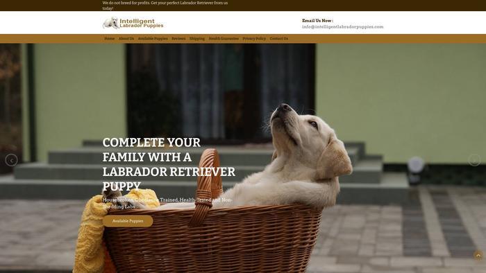 Intelligentlabradorpuppies.com - Golden Retriever Puppy Scam Review
