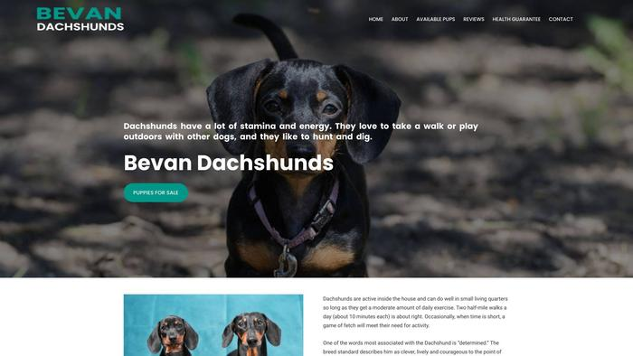 Bevandachshunds.com - Dachshund Puppy Scam Review