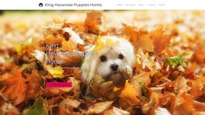 Kinghavanesepuppieshome.com - Havanese Puppy Scam Review