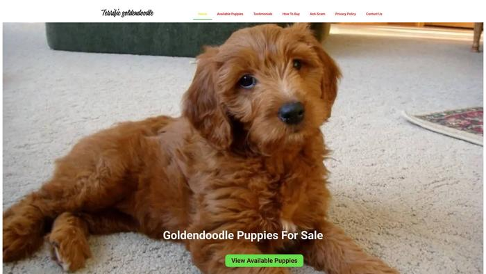 Terrificgoldendoodle.com - Golden Doodle Puppy Scam Review