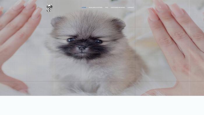 Valleysidepuppies.net - Bichon Frise Puppy Scam Review