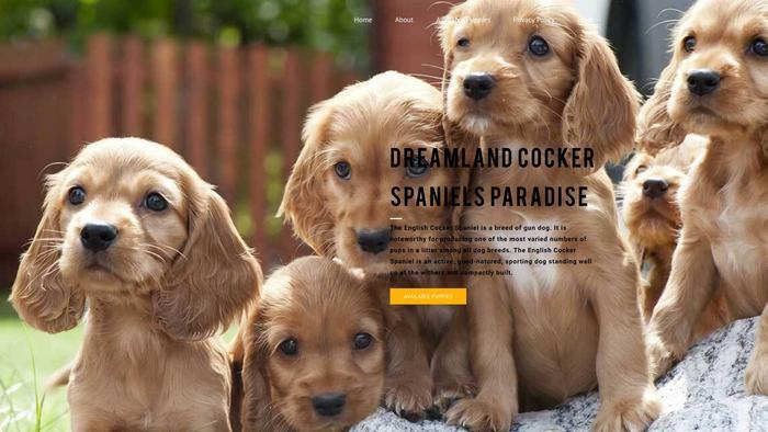 Dreamlandcockerspaniels.com - Cockerspaniel Puppy Scam Review