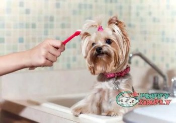 Brushing Dogs Teeth  best dog toothpastes