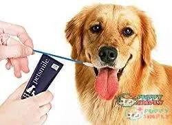 Petsmile Professional Dog Toothpaste 1