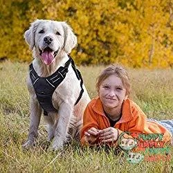 Rabbitgoo Front Range - best dog harness to stop pulling