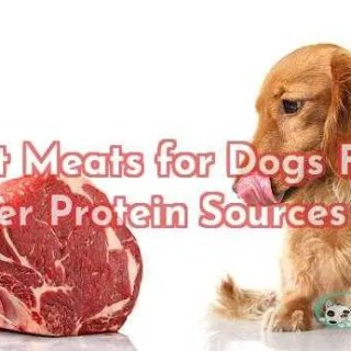 Best Meats for Dogs Find Proper Protein Sources 2019
