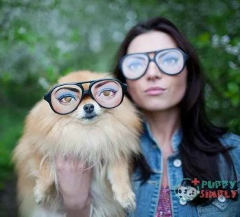 Fashion couple Factors That Influence The Price Of A Pomeranian