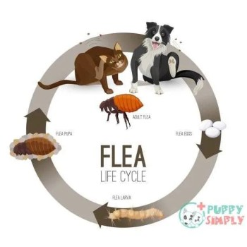 flea life cycle circle with headlines vector illustration - flea dogs stock illustrations clip art cartoons & icons What Are Flea Pills?