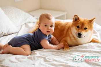 six month baby and shiba inu dog lying on the bed together looking at each other child is smiling and happy at home - akita s and pictures Akita