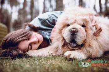 young woman hugging her chow chow dog in the park - chow chow s and pictures Chow Chow