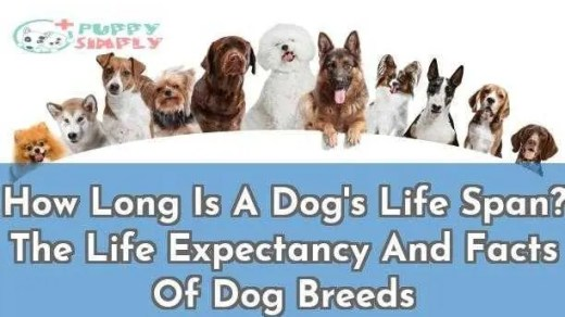 How Long Is A Dogs Life Span The Life Expectancy And Facts Of Dog Breeds
