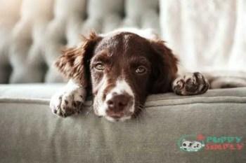 Causes Of Dog Barking At Night