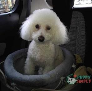 best dog car seats