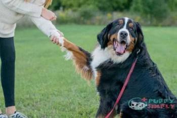 Steps to teaching your dog to shake