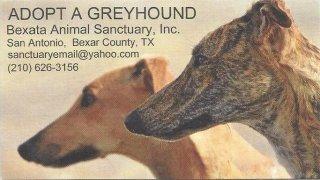 Greyhound Rescue San Antonio