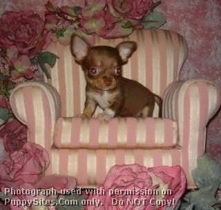 Fancy Paws Puppies & Boutique