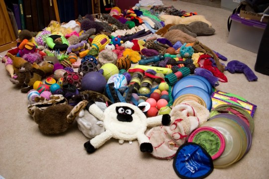 a lot of dog toys