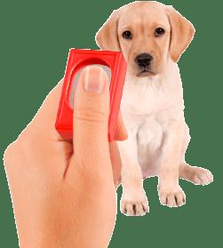 DOG CLICKER TRAINING