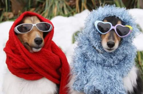 stylish winter dogs