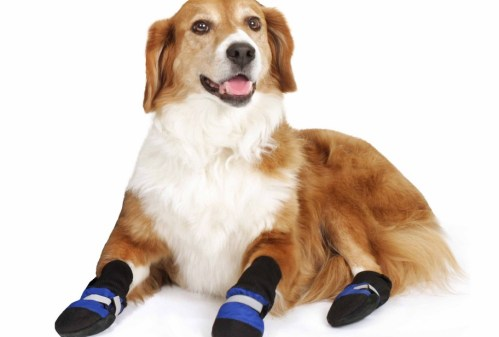 dog wearing dog booties