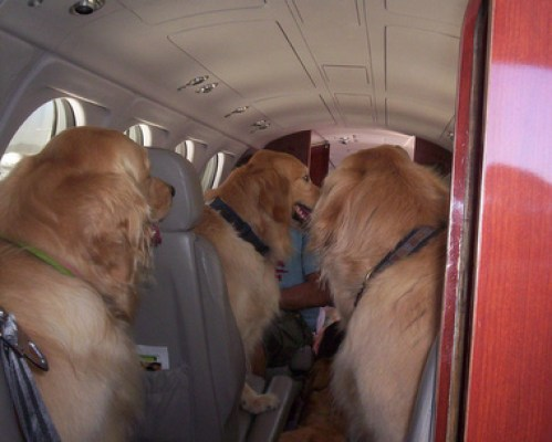 traveling with dog on plane