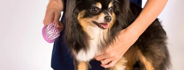 Tips For Grooming Your Dog at Home