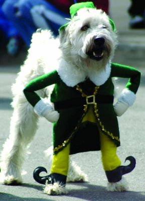 dog halloween costume luck of the irish