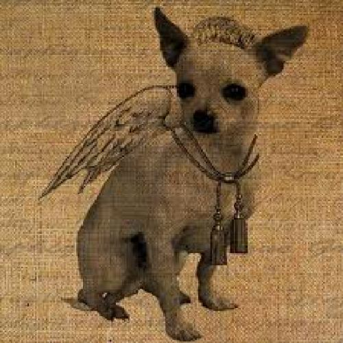 Chihuahua With Angel Wings