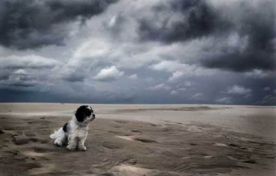 A pic of a dog sitting on beach