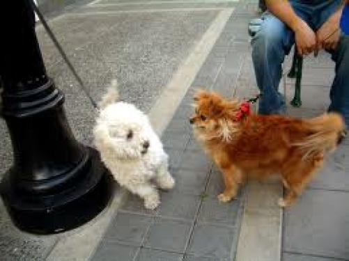 two dogs hanging out