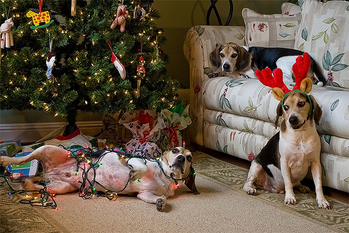 beagle wrapped in christmas lights