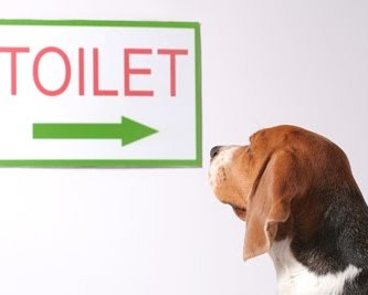 dog looking at toilet sign