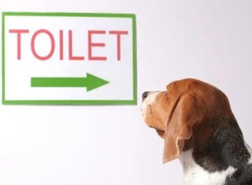 dog looking at toilet sign