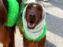 Irish Dogs 7