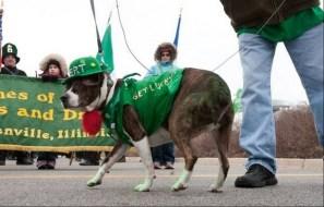 Irish Dogs 9