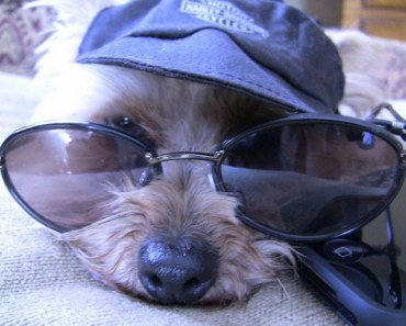 A Funny Gallery of Dogs Wearing Sunglasses