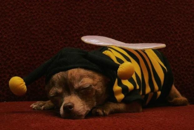 Bee_Costumes_10