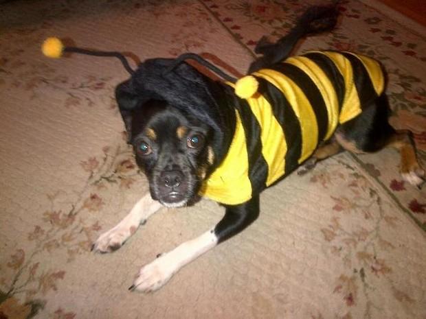 Bee_Costumes_11