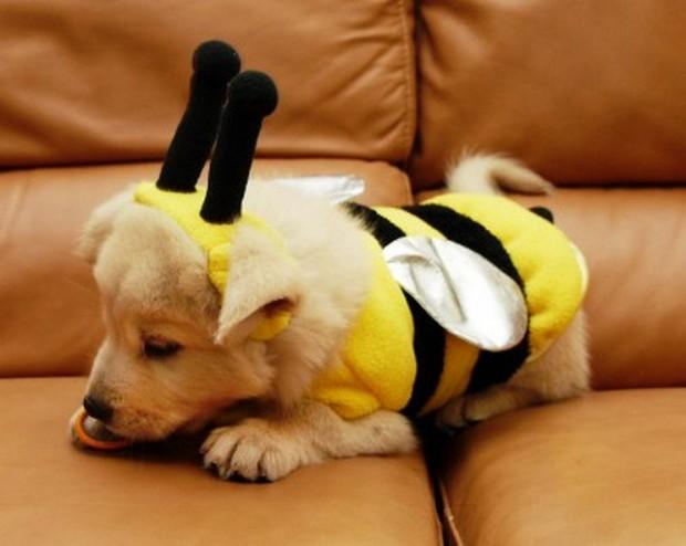 Bee_Costumes_2