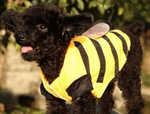 Bee_Costumes_8