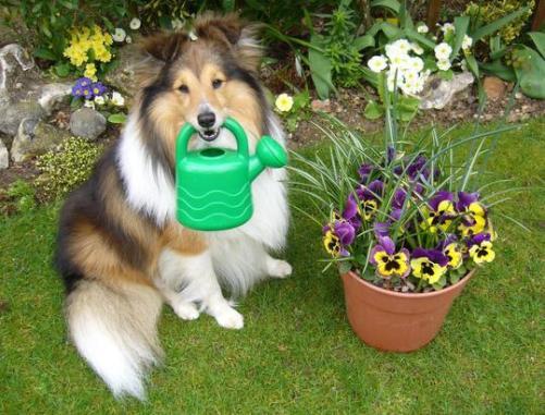 Dog-in-Garden-24