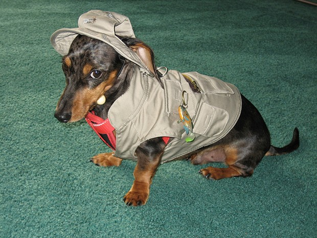 Fisherman dog?