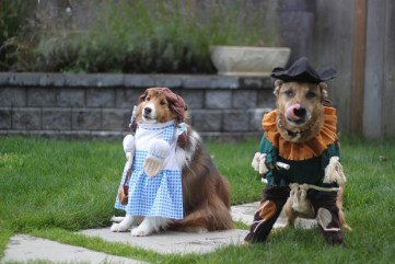 More Wizard of Oz dogs