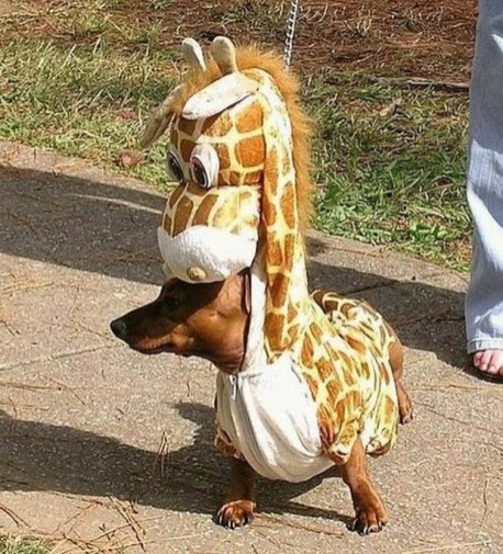 Dog in a giraffe costume